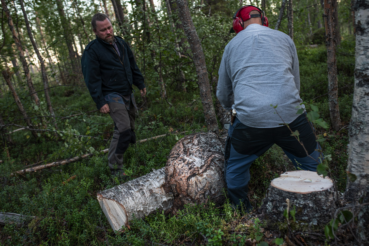 Two men in the wood cutting a tree.