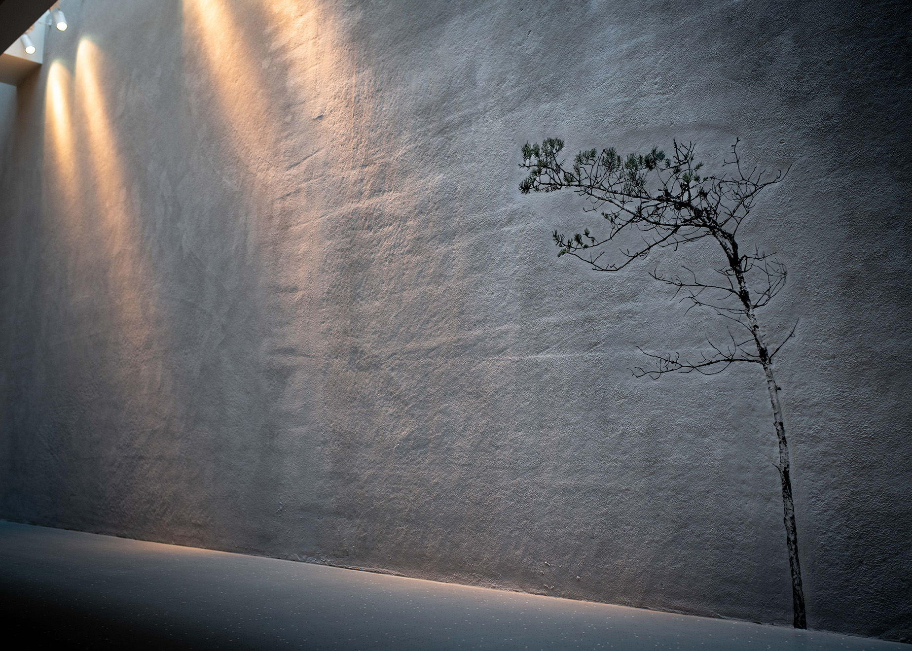 Image of a lit wall with a pine, from above.