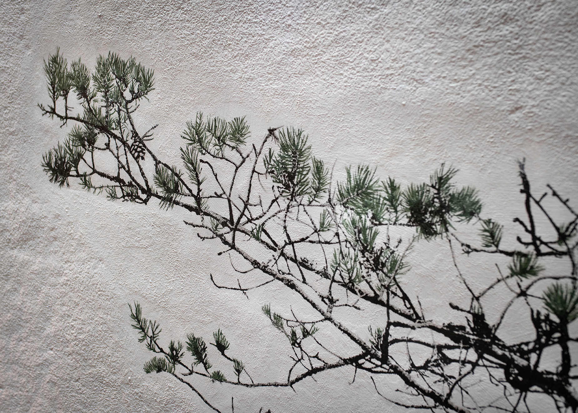 Image of a lit wall with a pine, close-up.