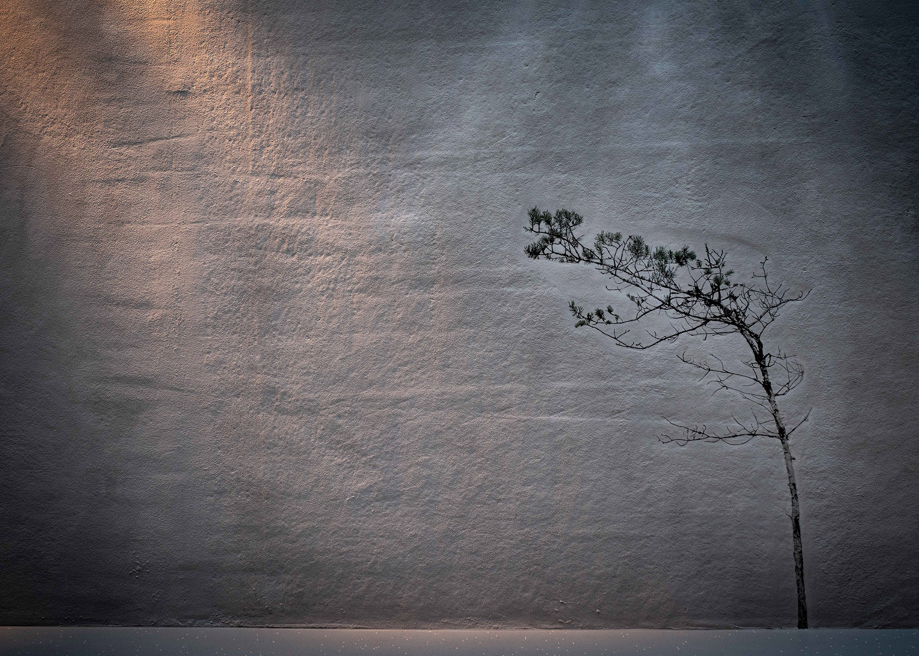 Image of a lit wall with a pine.
