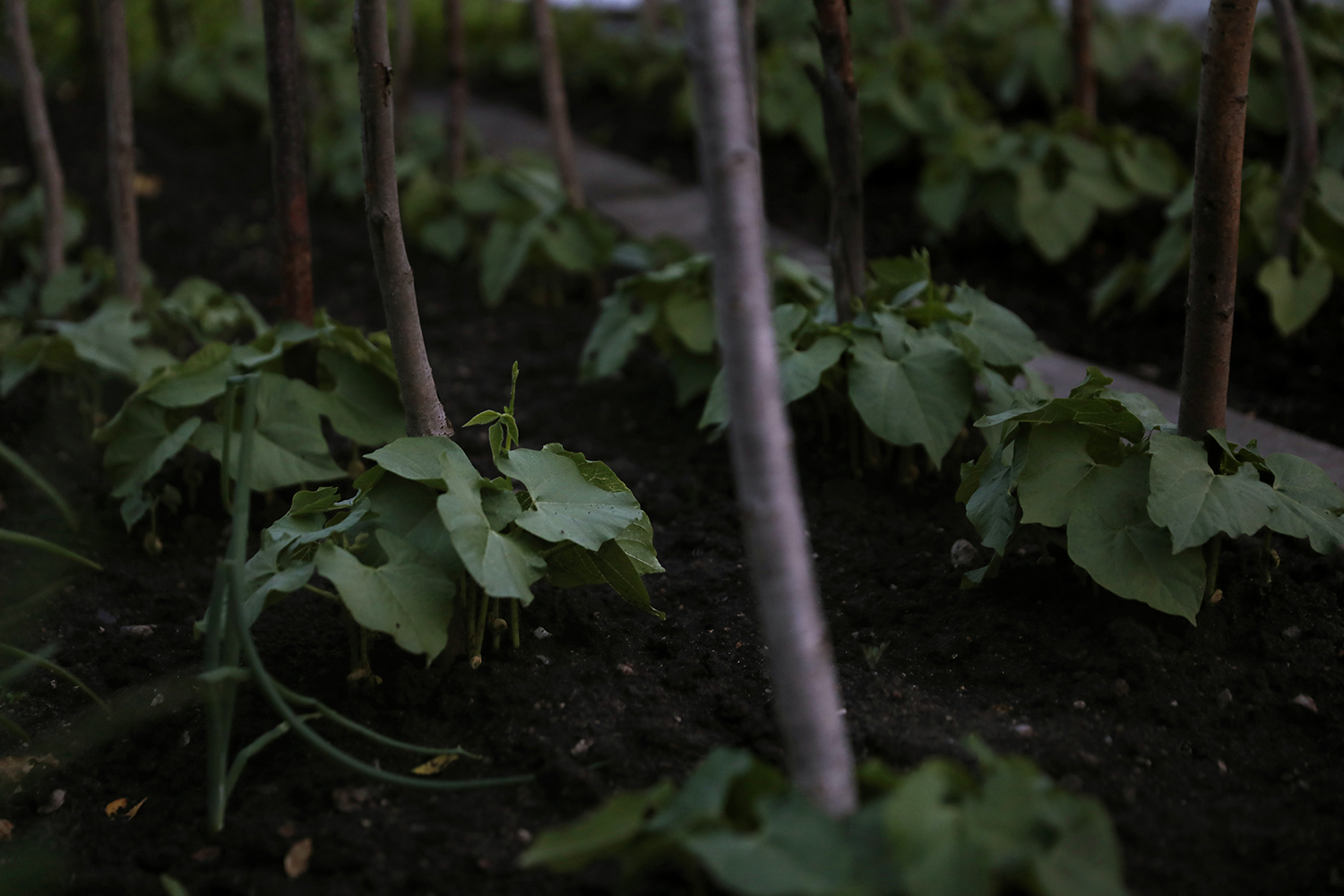 Close up of a suburban cultivation.