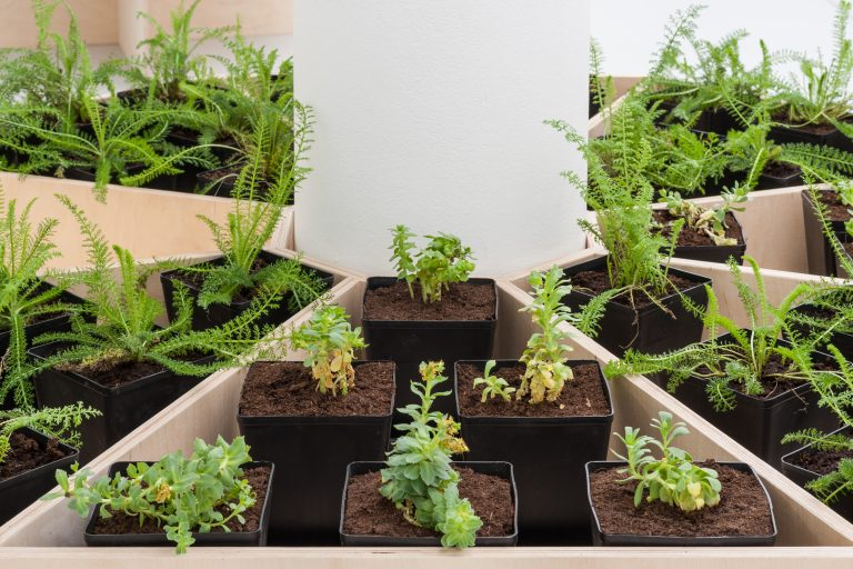 Plants in pots in a circle.